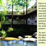 Phoenix Institute of Herbal Medicine and Acupuncture (PIHMA)
